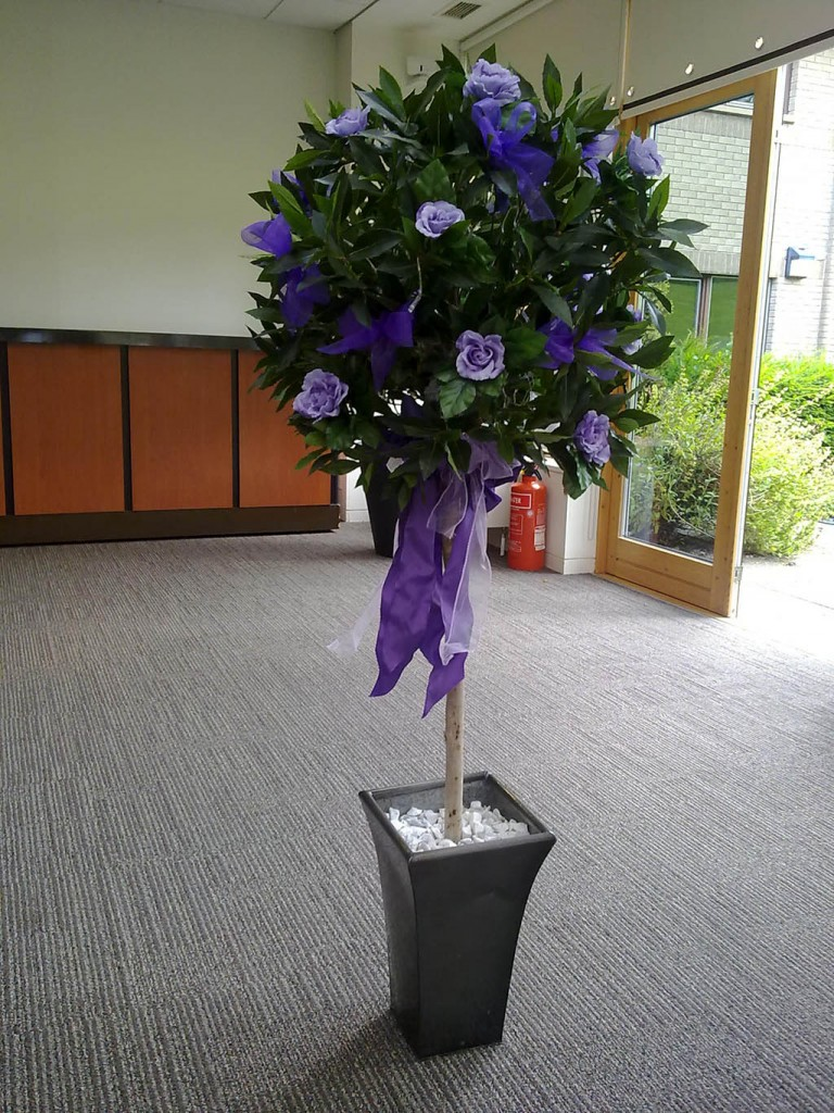 Lollipop Trees:Hire