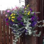 Hanging Basket -Branch Out Garden Centre
