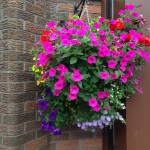 Luxury Hanging Basket - Branch Out Garden Centre